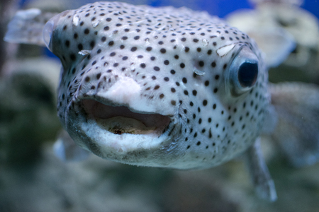 Exotic spotted fish fish-urchin Imagens - 83197798