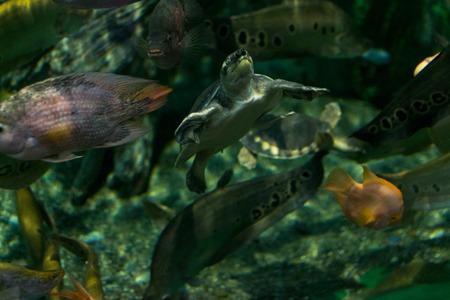 Turtles in aquarium Editöryel