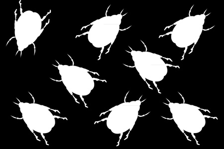revolting: Black background with white beetles Illustration