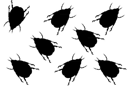 revolting: Black beetles on white background
