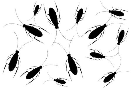 Cucarachas negras aisladas sobre fondo blanco  Foto de archivo - 9917811