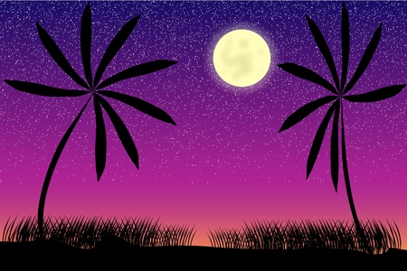 Tropical night with palms, moon and stars
