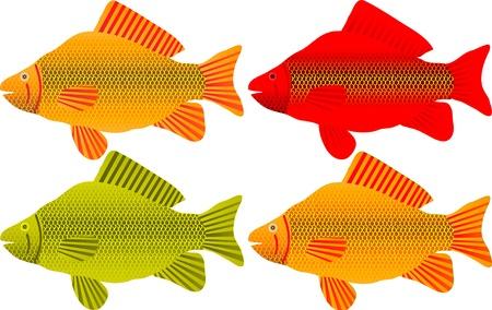 crucian: Set of fishes on white background