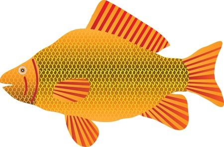 crucian: fish isolated on white background