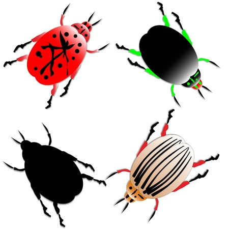 Set of the beetles on white background Stock Vector - 10034378