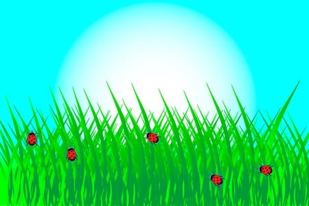 Green grass with ladybirds - vector Stock Vector - 10034428
