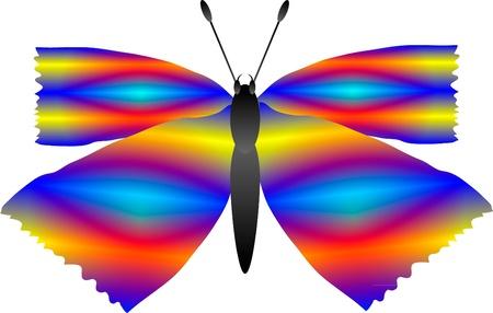 mid air: Imagen de una mariposa aislada sobre fondo blanco