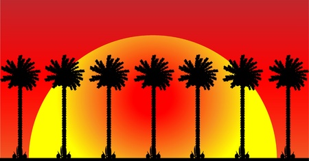 Group of palm trees on at sunset background. Stock Vector - 10228754
