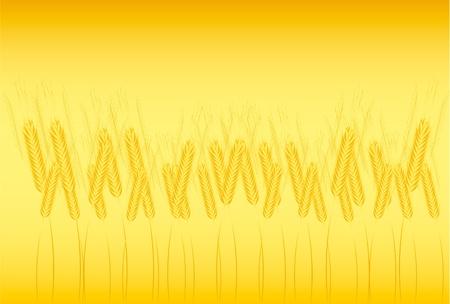 thresh: Field of wheat on orange background - vector