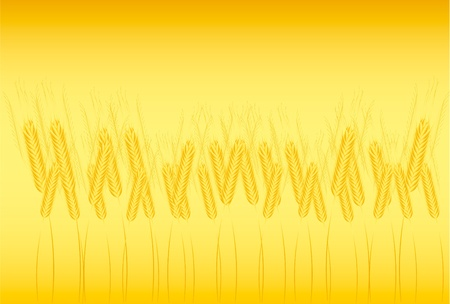 Field of wheat on orange background - vector