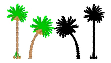 decision tree: Set of palm trees isolated on white background