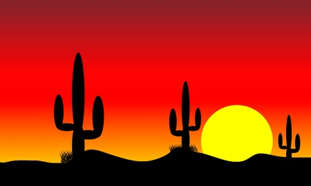 Sunset in mexico desert with cactus plants