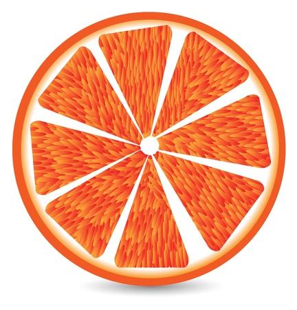 Orange segment isolated on a white background.  Vector