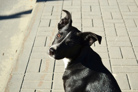 glance: Portrait of a stray dog with a speaking glance