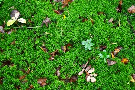 De foto van verse groene mos achtergrond