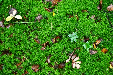 The photo of fresh green moss background