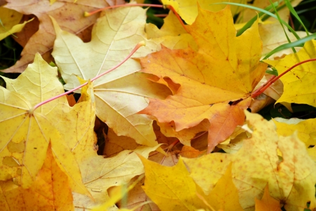 Photo of the autumn leaves background . Stock Photo - 10723721