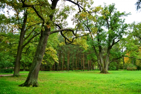 selo: The photo of park in Tsarskoe Selo, Russia