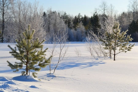 Winter landscape with two small fir tree .