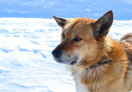 The photo of country dog on snow background. photo