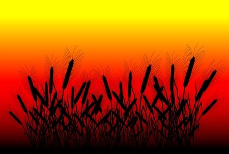thresh: Campo de trigo en el atardecer de fondo - vector Vectores