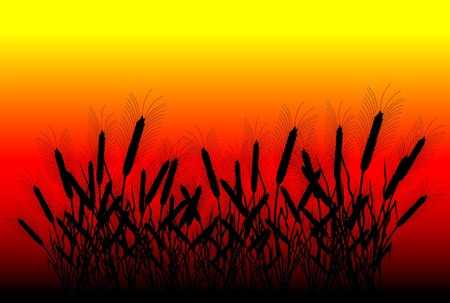 thresh: Field of wheat at sunset background - vector