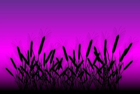 thresh: Campo de trigo despu�s de la puesta de sol - vector