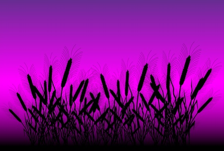 Field of wheat after sunset - vector