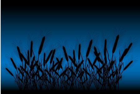 thresh grain: Field of wheat at night - vector