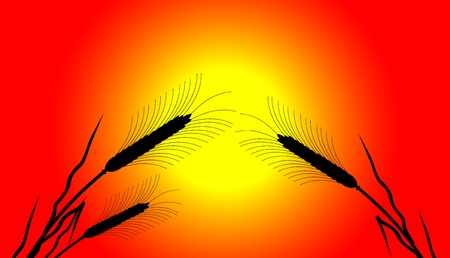 Ears of wheat at sunset - vector