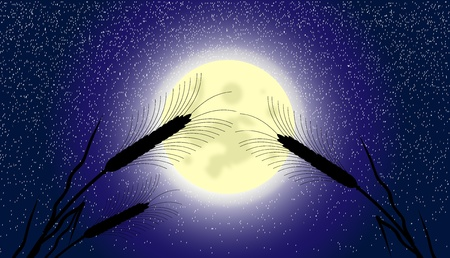 Ears of wheat at moonlit night - vector Stock Vector - 10903779