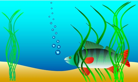 weeds: Underwater landscape - perch hiding in the weeds - vector Illustration