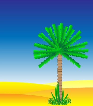 Palm in the desert - vector illustration. Stock Vector - 11087197