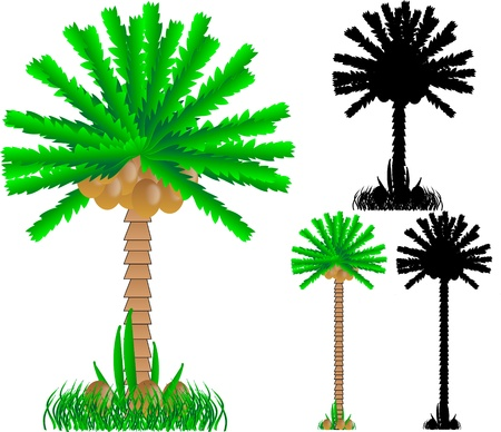 Set of various palms isolated on white background - vector Stock Vector - 11087288