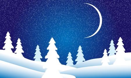 Winter landscape: fir tree forest at night
