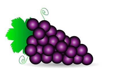 Purple grapes with green leaves isolated on white Vector