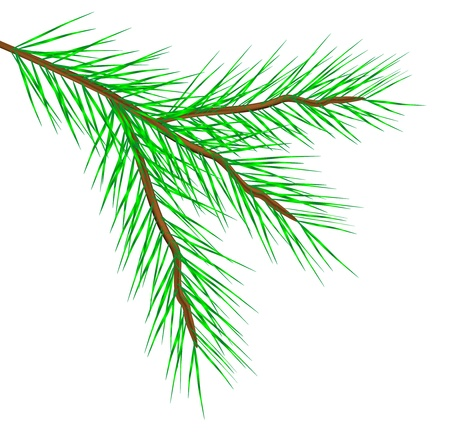 fur trees: fir tree branch isolated on a white background Illustration