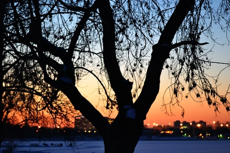 Colorful sunset in winter with a tree photo