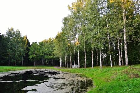 Summer landscape - park in Pavlovsk, surroundings of St. Petersburg, Russia photo