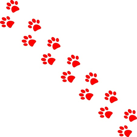 animal tracks: Paw trail isolated on white background