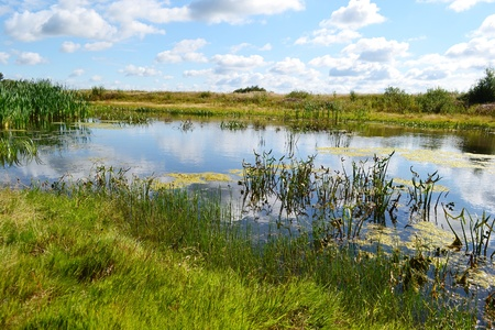 View of the river Kopanets on a sunny summer day, Stolin, Belarus photo
