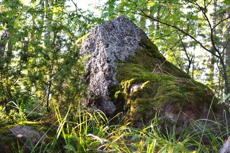 Stone in moss, The Karelian Isthmus, Russia Stock Photo - 11996696