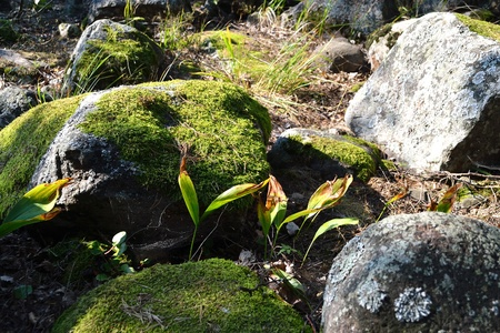isthmus: Stone in moss, The Karelian Isthmus, Russia