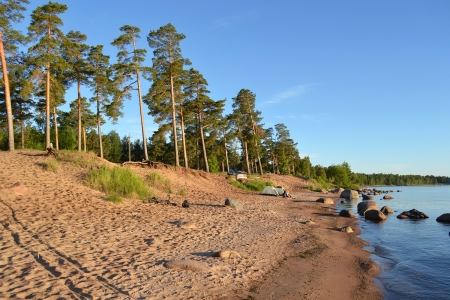 Pine forest on the shores of Lake Ladoga in the early morning, Russia photo