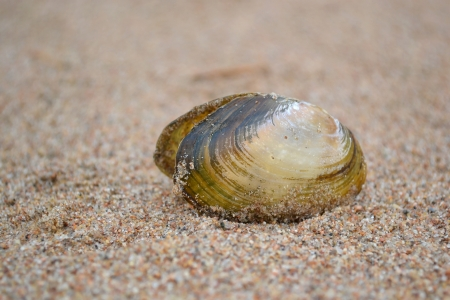 The photo of sea shell on the beach photo