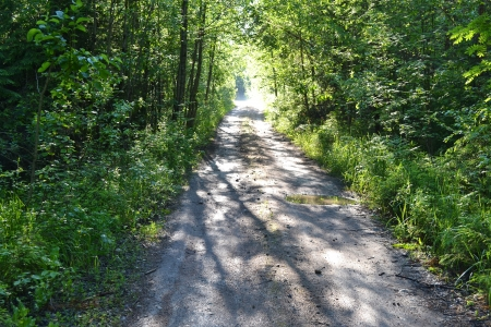 isthmus: Track in summer forest, the Karelian Isthmus, Russia