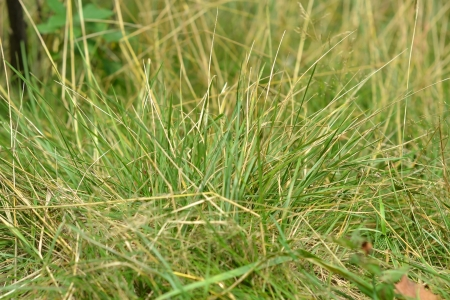 The photo of partially dried grass close up photo