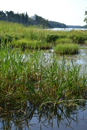 isthmus: Shore of the lake on the Karelian Isthmus, Russia