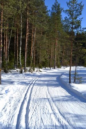 skipiste: Wald im Winter, sonniger Tag und Skipiste, Leningrad Region, Russland