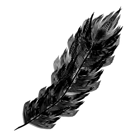 Balck feather icon on white background. Vector illustration.